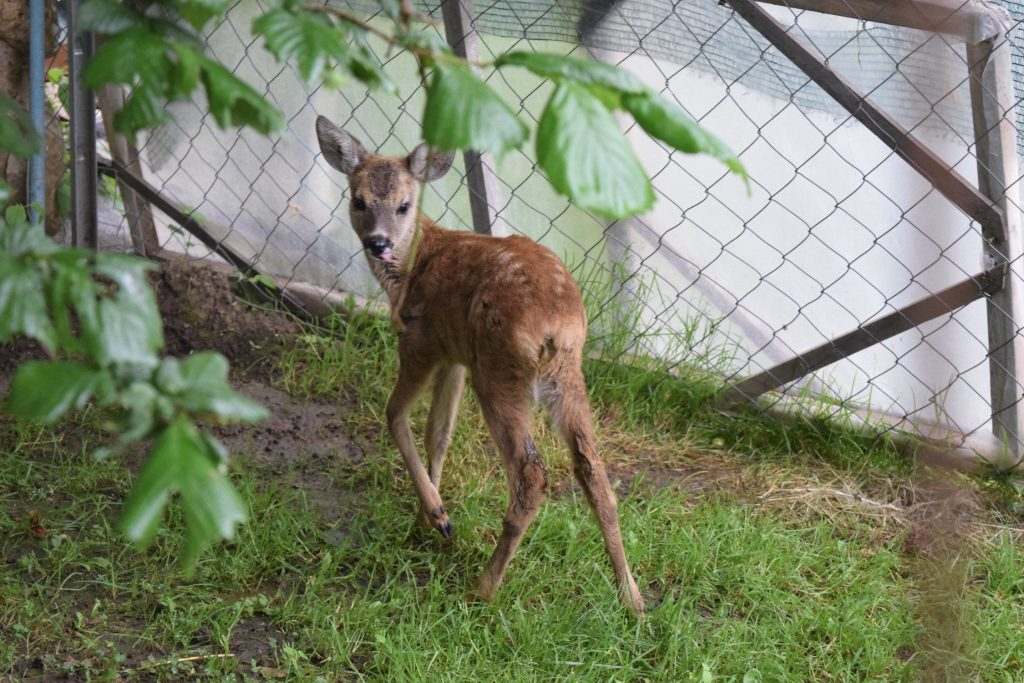 Bambi iz Poganova